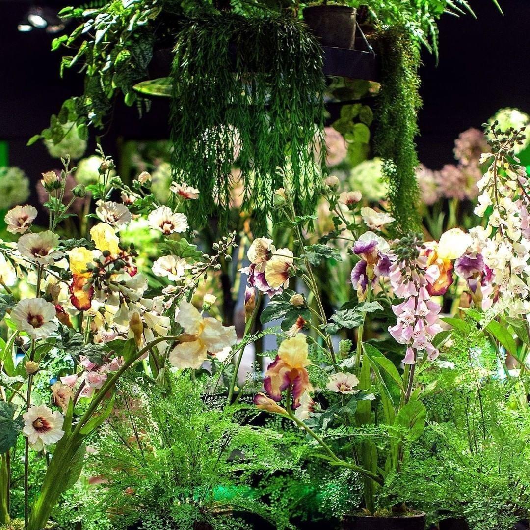, Silka-ka aukštos kokybės dirbtiniai augalai, Decosense, Decosense